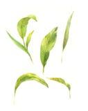 Pintura de la acuarela de hojas verdes Fotos de archivo