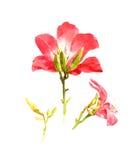 Pintura de la acuarela de hojas y de la flor Fotos de archivo libres de regalías