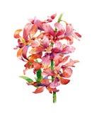 Pintura de la acuarela de hojas y de la flor Fotografía de archivo