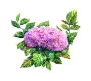 Pintura de la acuarela de hojas y de la flor Foto de archivo