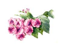 Pintura de la acuarela de hojas y de la flor Imagenes de archivo