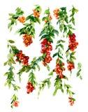 Pintura de la acuarela de hojas y de la flor Imagen de archivo libre de regalías