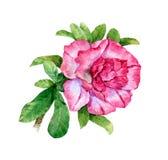 Pintura de la acuarela de hojas y de la flor Imágenes de archivo libres de regalías