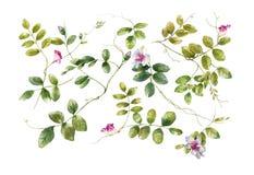 Pintura de la acuarela de hojas y de la flor Foto de archivo libre de regalías