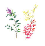 Pintura de la acuarela de hojas y de la flor, en el ejemplo blanco del fondo Fotos de archivo