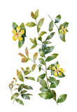 Pintura de la acuarela de hojas y de la flor, en el fondo blanco Imagenes de archivo
