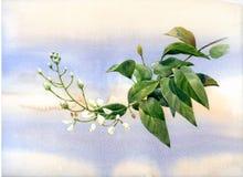 Pintura de la acuarela de hojas y del blanco de la flor Fotos de archivo