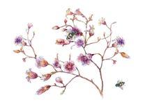 Pintura de la acuarela de la abeja y de la flor, en el fondo blanco Fotografía de archivo