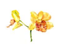 Pintura de la acuarela de la flor en blanco Fotos de archivo libres de regalías
