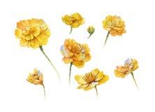 Pintura de la acuarela de la flor, en el fondo blanco Imagen de archivo