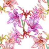 Pintura de la acuarela de la hoja y de las flores, modelo inconsútil Imagen de archivo libre de regalías