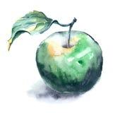 Pintura de la acuarela de la manzana verde Fotografía de archivo libre de regalías