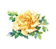 Pintura de la acuarela de la rosa del amarillo Foto de archivo
