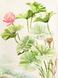 Pintura de la acuarela de las hojas y de la flor del loto Imagenes de archivo