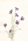Pintura de la acuarela de los Cornflowers Imágenes de archivo libres de regalías