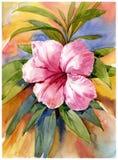 Pintura de la acuarela de los ejemplos de la flor Fotografía de archivo libre de regalías
