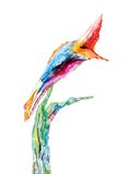Pintura de la acuarela de un pájaro tropical Fotos de archivo