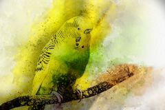 Pintura de la acuarela del budgie en fondo brillante Fotos de archivo