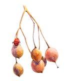 Pintura de la acuarela del otoño con la mariquita Fotos de archivo libres de regalías