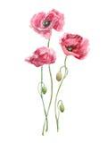 Pintura de la acuarela Flores rosadas Fotos de archivo libres de regalías