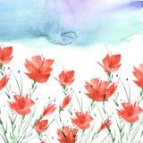 Pintura de la acuarela Un ramo de flores de las amapolas rojas, wildflowers en un fondo aislado blanco imagen de archivo