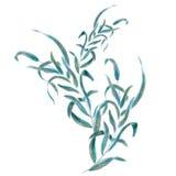 Pintura de la hoja de la acuarela ilustración del vector