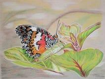 Pintura de la mariposa del Lacewing (superficie inferior) Imagen de archivo libre de regalías