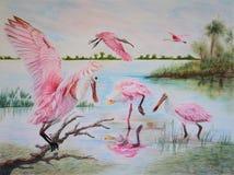 Pintura de los pájaros del spoonbill rosado (ajaja del Platalea) Fotografía de archivo