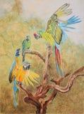 Pintura de los pájaros del macaw Fotos de archivo