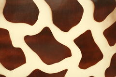 Pintura de piel de la jirafa Fotografía de archivo libre de regalías