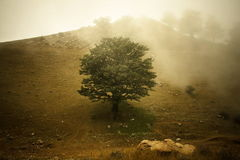 Pintura de un árbol fotografía de archivo libre de regalías