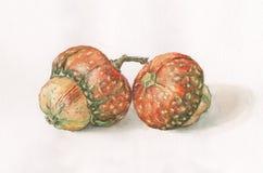 Pintura decorativa de la acuarela de las calabazas Imagenes de archivo