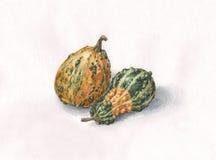 Pintura decorativa de la acuarela de las calabazas Fotos de archivo libres de regalías