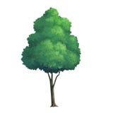 pintura del árbol Foto de archivo libre de regalías