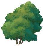 pintura del árbol Imagen de archivo libre de regalías