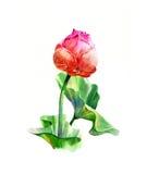 Pintura del ejemplo de la acuarela de hojas y del loto Foto de archivo