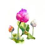 Pintura del ejemplo de la acuarela de hojas y del loto Imagen de archivo libre de regalías
