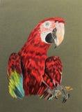 Pintura del pájaro del macaw Foto de archivo libre de regalías