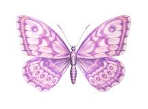 Pintura detallada de la mariposa rosada dulce Aislado en blanco Fotos de archivo