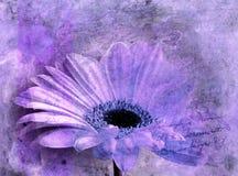 Pintura digital de la flor violeta del astra, abstracta stock de ilustración