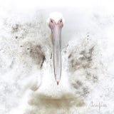 Pintura digital do pelicano ilustração do vetor