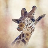 Pintura digital principal do girafa Imagens de Stock