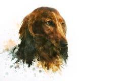 Pintura do cão do bassê imagem de stock royalty free