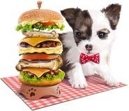 Pintura do cachorrinho & do Hamburger Imagens de Stock Royalty Free