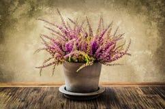 pintura do Cargo-processo da flor da urze no potenciômetro Imagem de Stock