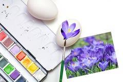 A pintura eggs para a Páscoa com flores da mola, fundo branco Imagens de Stock