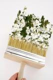 Pintura en el color de la primavera Imágenes de archivo libres de regalías