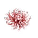 Pintura floral de la acuarela Fotos de archivo
