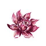 Pintura floral de la acuarela stock de ilustración