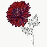 Pintura grafical aislada preciosa de la flor roja grande ilustración del vector